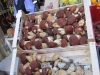 Funghi freschi